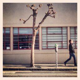strangetrees
