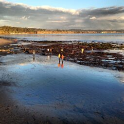 low tide exploring