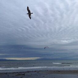 beach, clouds and birds