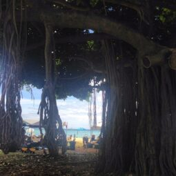 ocean through the banyan