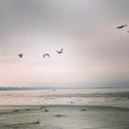 birds, sea lions, fog and waves. fun two hour morning with @maxkiesler