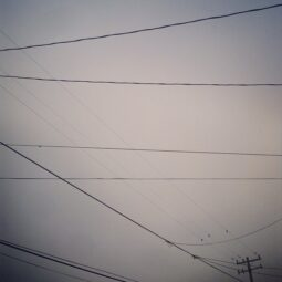 power lines and fog