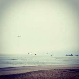 morning fog, birds, tiny waves