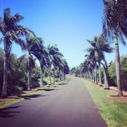 road of palms
