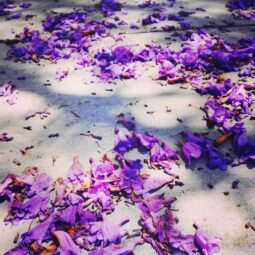 sidewalk covered in purple flowers