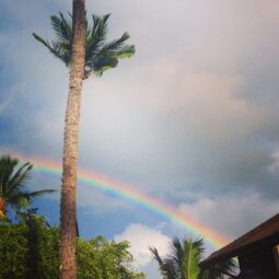 rainbows in paradise