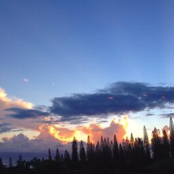 island pine trees and epic sunsets