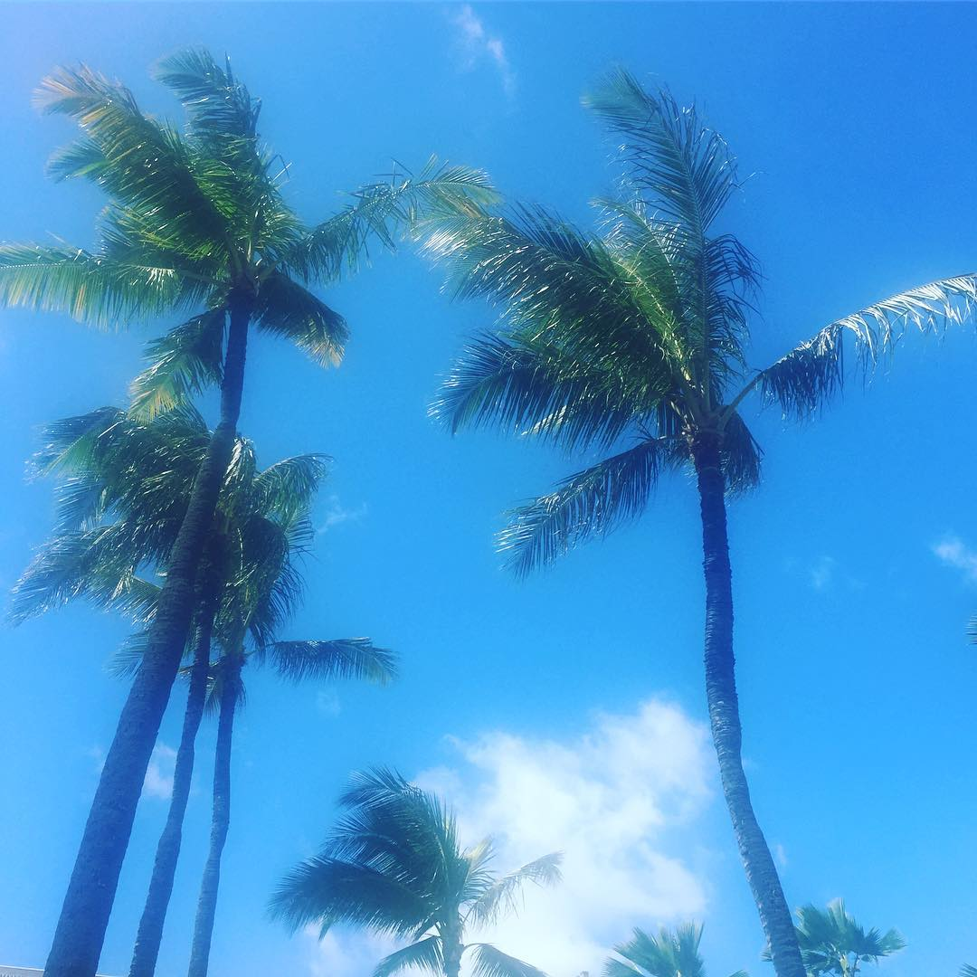 oahu palms, missed you