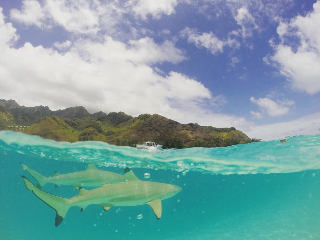 swimming and snorkeling with the sharks and stingrays, an incredible experience @tahititourisme