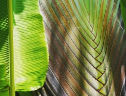 palm textures