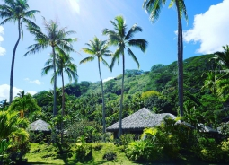 bungalows and jungle