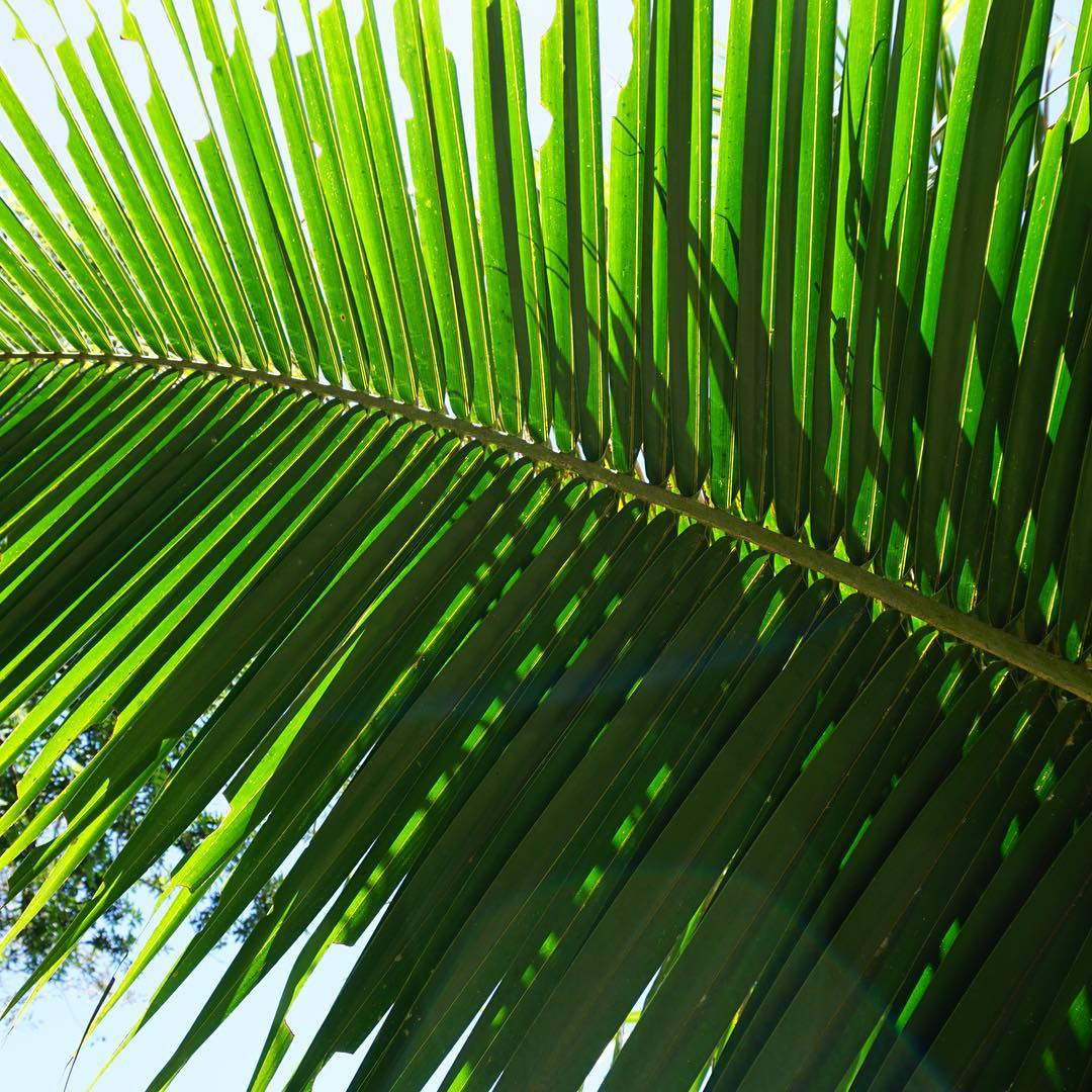 for the love of palms