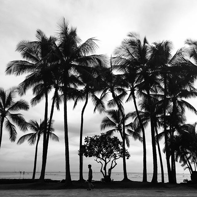 palms in noir